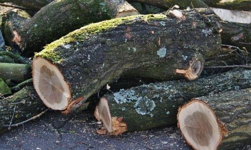 6500 деревьев срубят в Павлодаре, чтобы расширить канал для занятий академической греблей