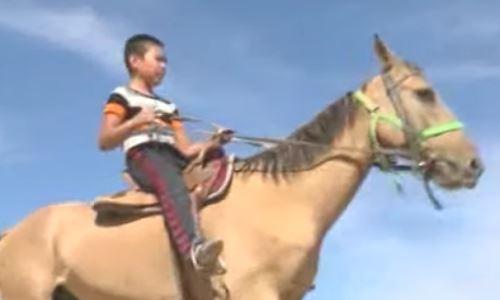 Лошадей адайской породы готовят к международным соревнованиям
