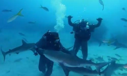 Майк Тайсон поплавал с акулами перед возвращением в ринг. Видео